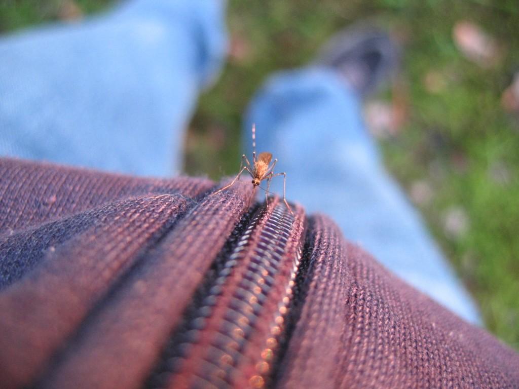 Hur lindra besvar vid myggbett